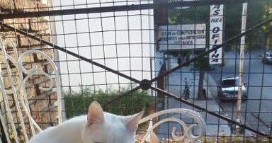 El De Sacar Pis Práctica Gato Casa Olor A Cómo 06tEn1O