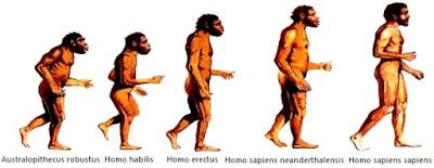 Dibujo de la Evolución del hombre con sus nombres