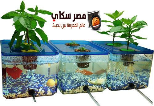 تعرف على فوائد النباتات المائية وأهم أنواعها  بحوض الأسماك