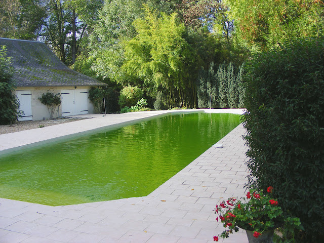 Private swimming pool. Indre et Loire, France. Photographed by Susan Walter. Tour the Loire Valley with a classic car and a private guide.
