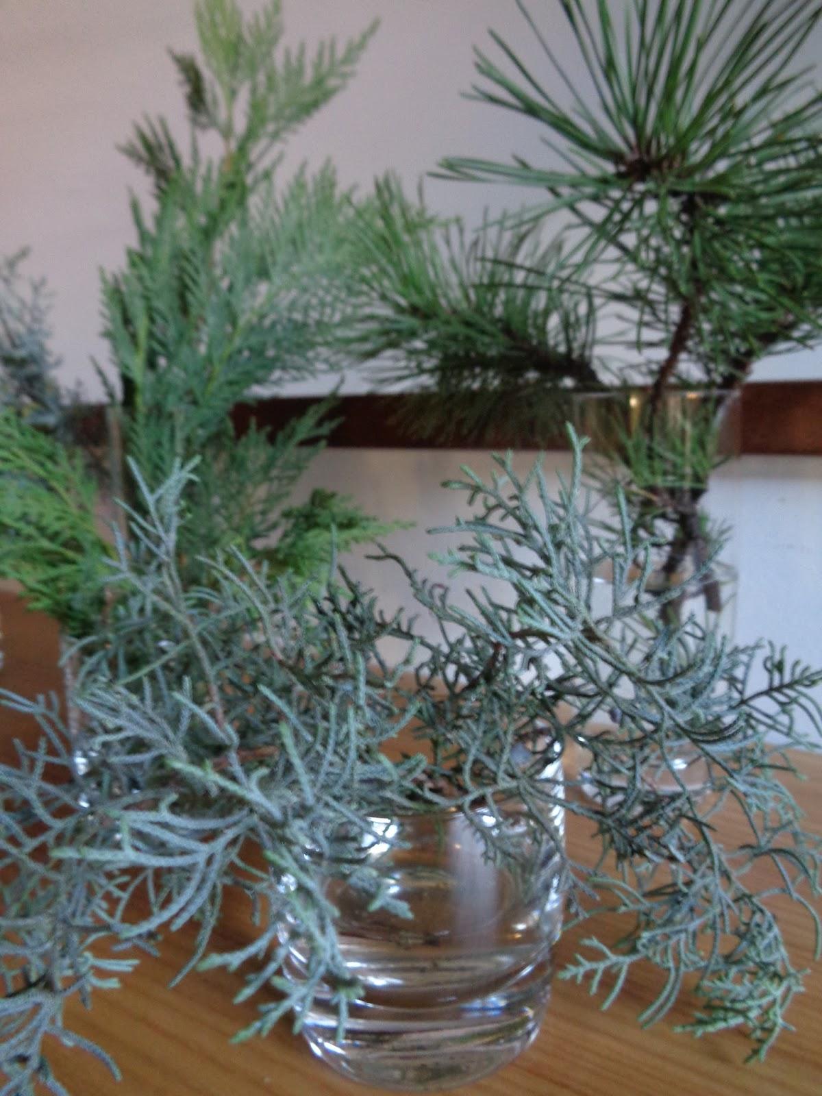 Foto Diario Di Una Giardiniera Curiosa Decorazione Invernale