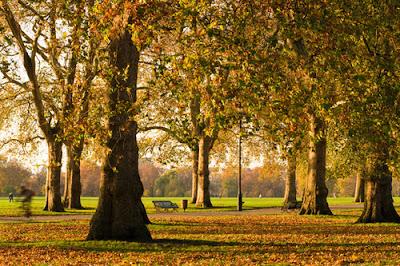 Hyde Park, Londres en otoño