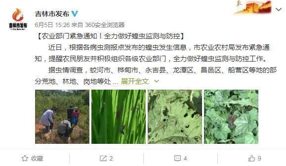 Vùng Đông Bắc Trung Quốc xuất hiện nhiều châu chấu, chính quyền thông báo khẩn