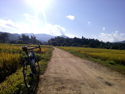 дорога через рисовое поле
