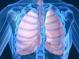 Penyakit Paru Paru Karena Rokok download%2B%25281%2529