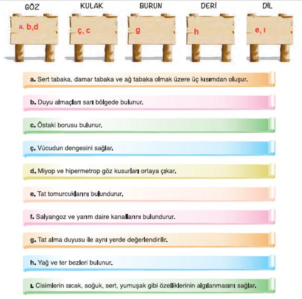 7. Sınıf Mevsim Yayınları Fen Bilimleri Ders Kitabı 57. Sayfa Cevapları Duyu Organları, Organ Bağışı ve Organ Nakli