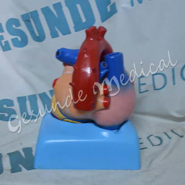 agen organ bagian jantung