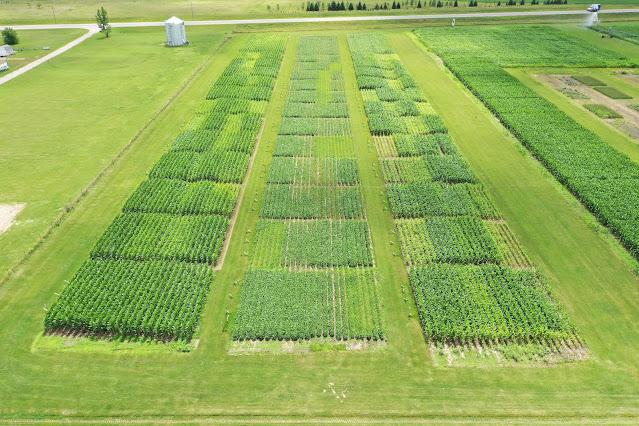 Rosholt Research Farm Westport Minnesota