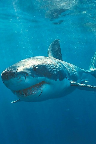 iPhoneZone: Shark Fish...