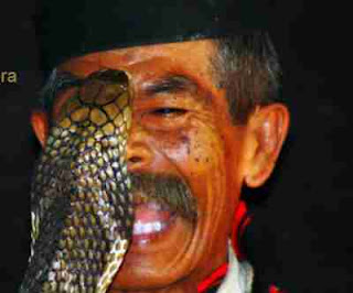 Bahaya gigitan ular yang perlu anda ketahui