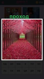 655 слов проход сквозь аллею красного цвета 3 уровень