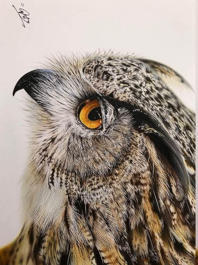 04-Owl-s-detailed-feathers-Haruki-Kudo-www-designstack-co