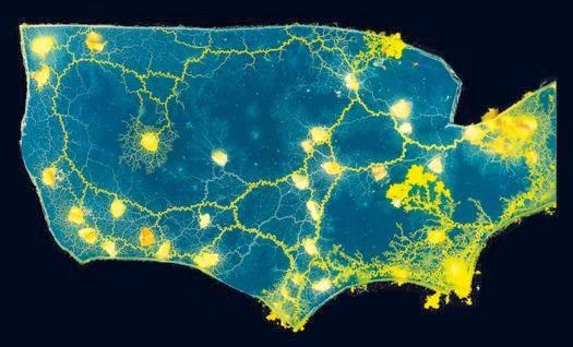 Le métro de Tokyo et les routes des États-Unis modélisés par un micro-organisme