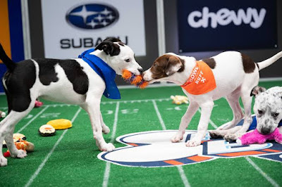 Puppy Bowl XVII: Team Ruff wins with dramatic last-minute