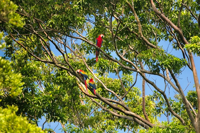 A Amazônia conta com mais de 400 espécies de aves