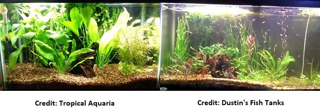 Neon Tetra Tank Setup & Care Guide