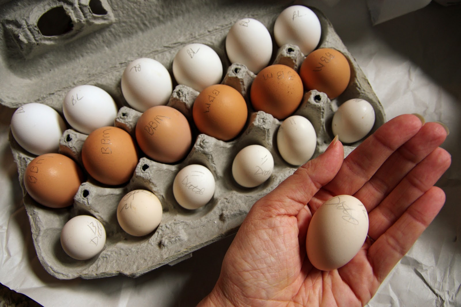 How to Sell Hatching Eggs | Community Chickens
