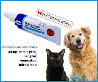 Terramycin untuk mata kucing berair