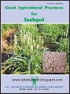 Isabgol Plant Information Cultivation and Uses