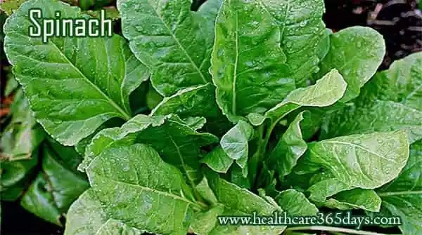 spinach-is good-for-boosting-your-immune-system