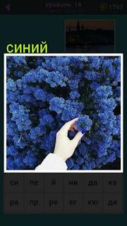 изображение куста с синими цветами, и одна рука срывает цветок 667 слов 16 уровень