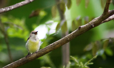 A female sunbird