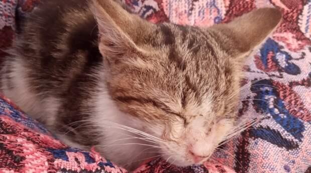 Котёнок сидел у магазина и плакал, зовя на помощь. Он ничего не видел из-за болезни глаз