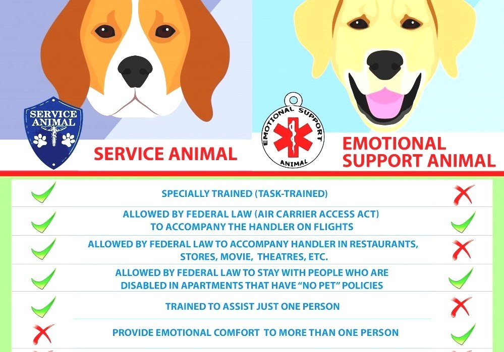 Emotional Support Animal Is An Emotional Support Dog A