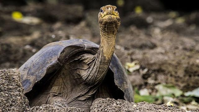 """Τα μυστικά για τη μακροζωία """"αποκαλύπτει"""" γιγάντια χελώνα που έζησε περίπου 1 αιώνα"""