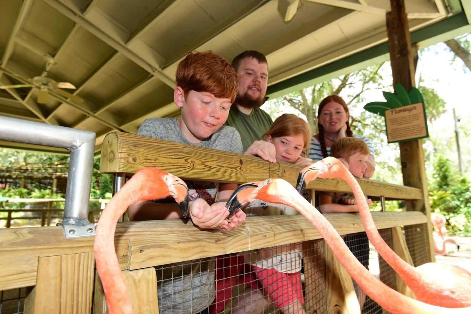 Holiday Memories : Making Pretzels at Home  - flamingos at busch gardens