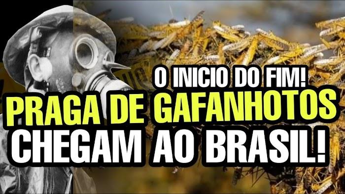 PRAGA DE GAFANHOTOS NO BRASIL - FIM DOS TEMPOS  ?