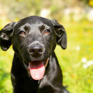 10 tips para cuando tenemos un cachorro en casa. www.soyunmix.com