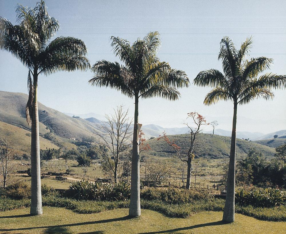 Backyard Paradise: Paradise Backyard: Roberto Burle Marx