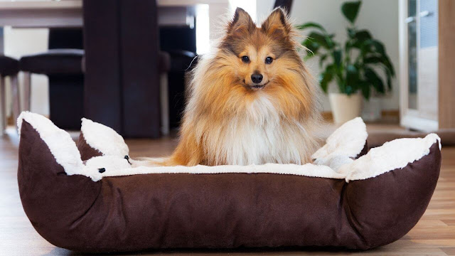 Fluffy Dog Bed & environment