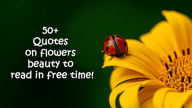 Quotes on flowers beauty