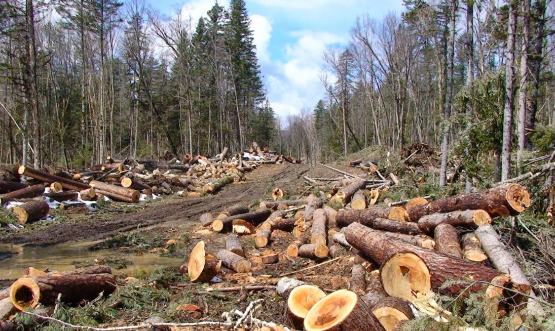 penebangan-hutan