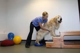 plataforma de fisioterapia para cães