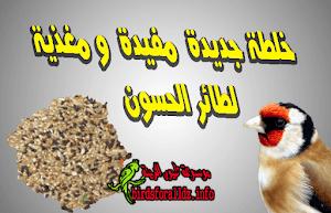 542674013 كيف تفرق بين ذكر و انثى فراخ الحسون بالصور - موسوعة طيور الزينة