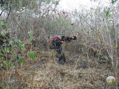 El bosque sub-caducifolio haciendo de las suyas en Cerro Viejo