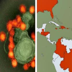 O vírus da Zika se espalhou um ano antes de ser notada