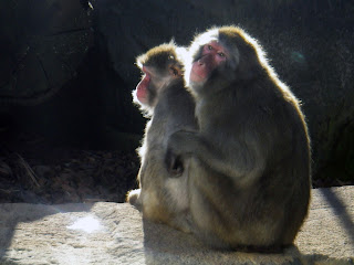 MONKEYS SAD WITH BOREDOM