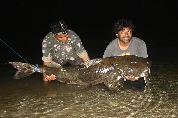 দানব বাঘাইড়  (Giant Devil Catfish)
