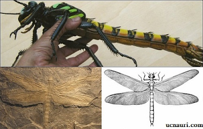 carboniferous giant insects