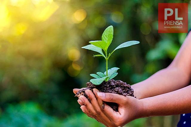 Vida más sustentable