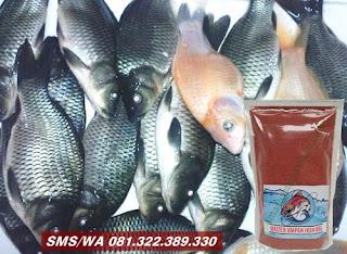 Umpan Ikan Mas Tombro Khusus Kilo Gebrus