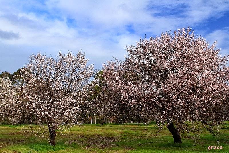 Barwy australijskiej wiosny i polskiej jesieni.