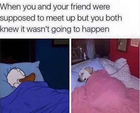 """cartoon memes"", ""trip memes"", ""sleep memes"""