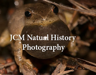 Click on Photo to Return to JCM Natural History