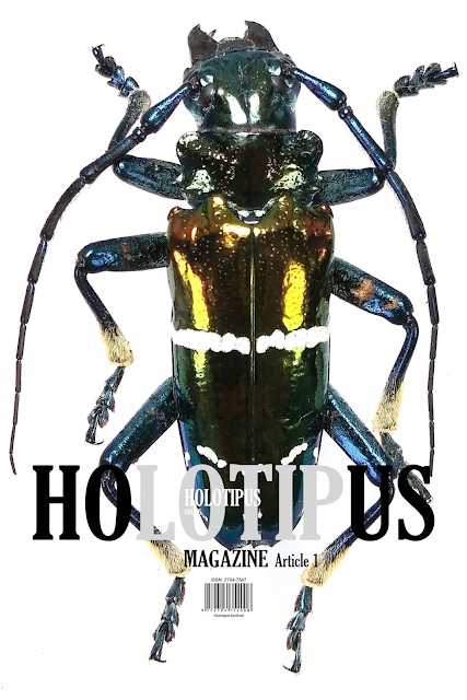 Calodema, Buprestidae, annae, new, species, Arfak, West, Papua, Weyland, mountains, Grasso, Matteo, 2020, HOLOTIPUS, magazine, online, taxonomy, stigmoderini, Casadio,