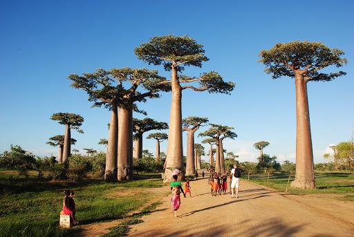 Baobab-Gasse